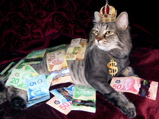 funny cat bathing in money